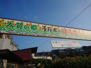 上大岡、東口商店街協賛「大賀の郷」3万本のヒマワリイベント開催です!